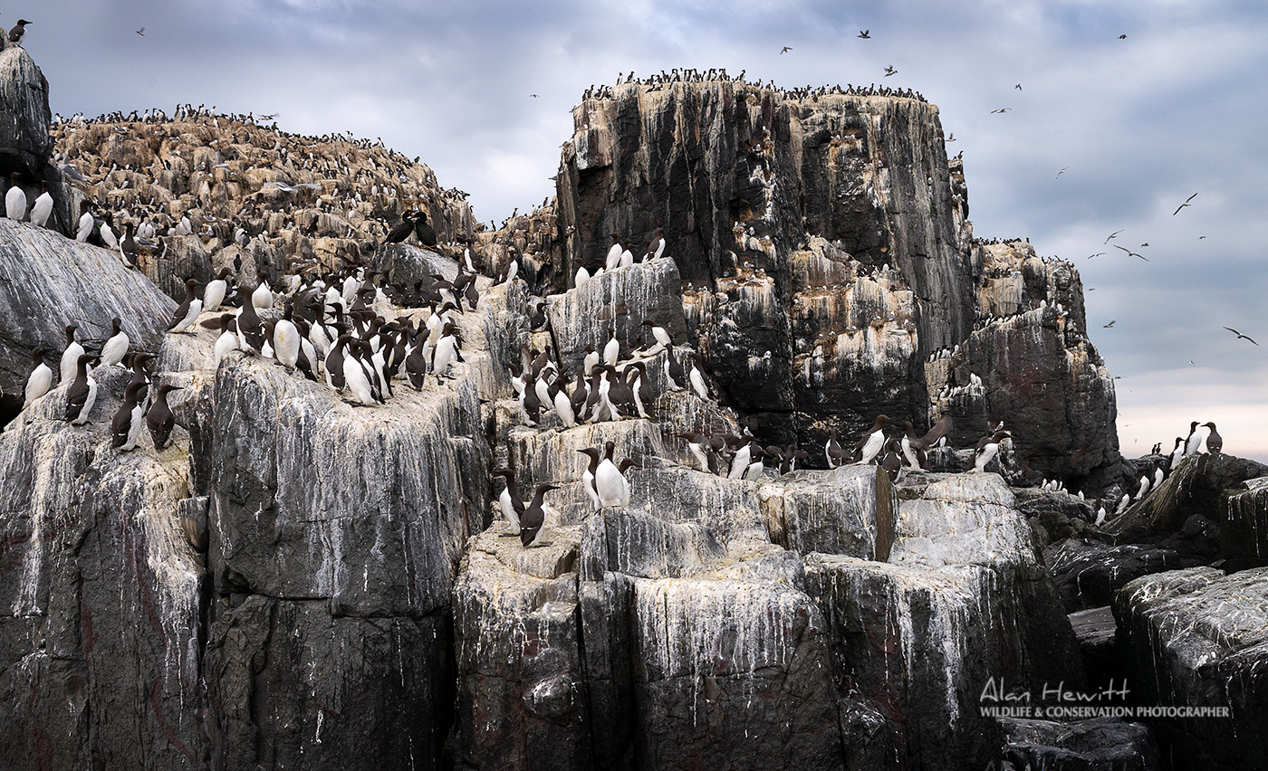 Staple Island, Farne Islands Wildlife Photography Workshop