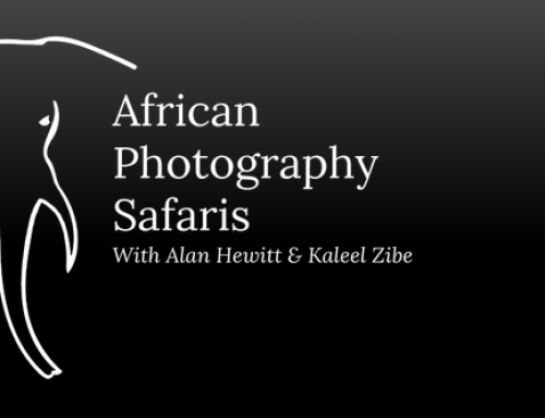 African Photography Safaris (.com)