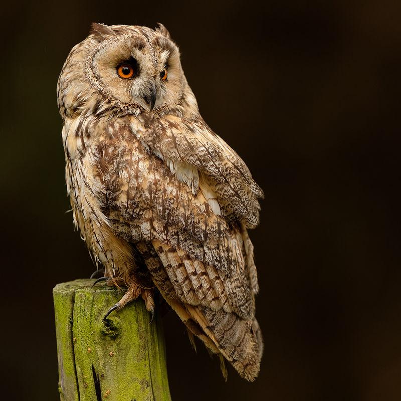Northumberland Birds of Prey Photography Workshop