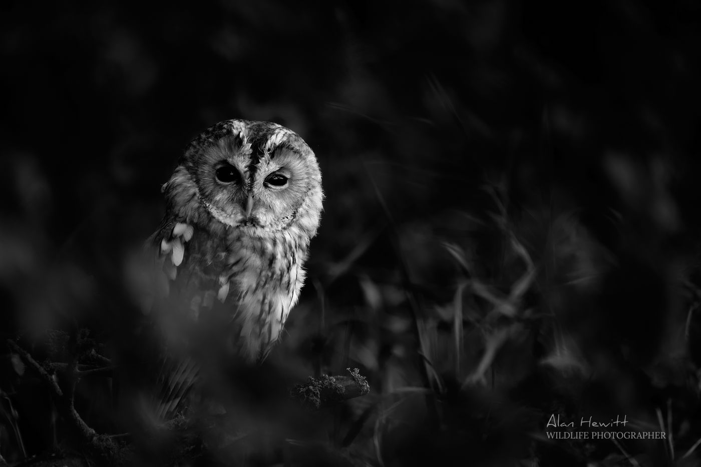 Birds of Prey Photography Workshop Northumberland