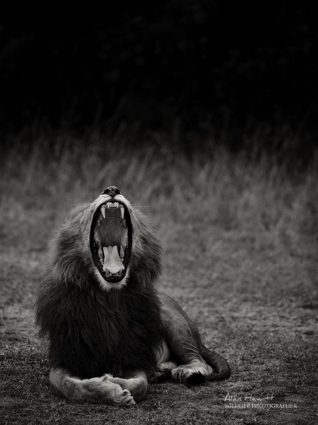Medium Format GFX50s Wildlife Photography - Alan Hewitt Photography