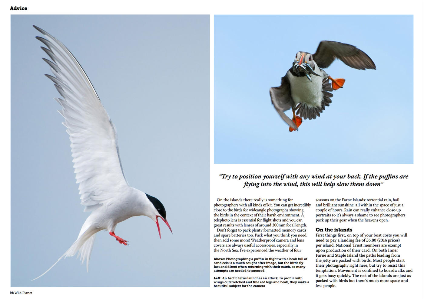 Wild Planet Photo Magazine - Farne Islands Alan Hewitt