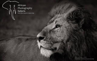 Alan Hewitt Wildlife Photography African Photography Safaris