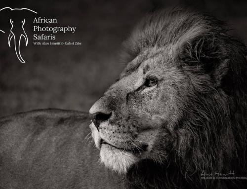 African Photography Safaris (.com)