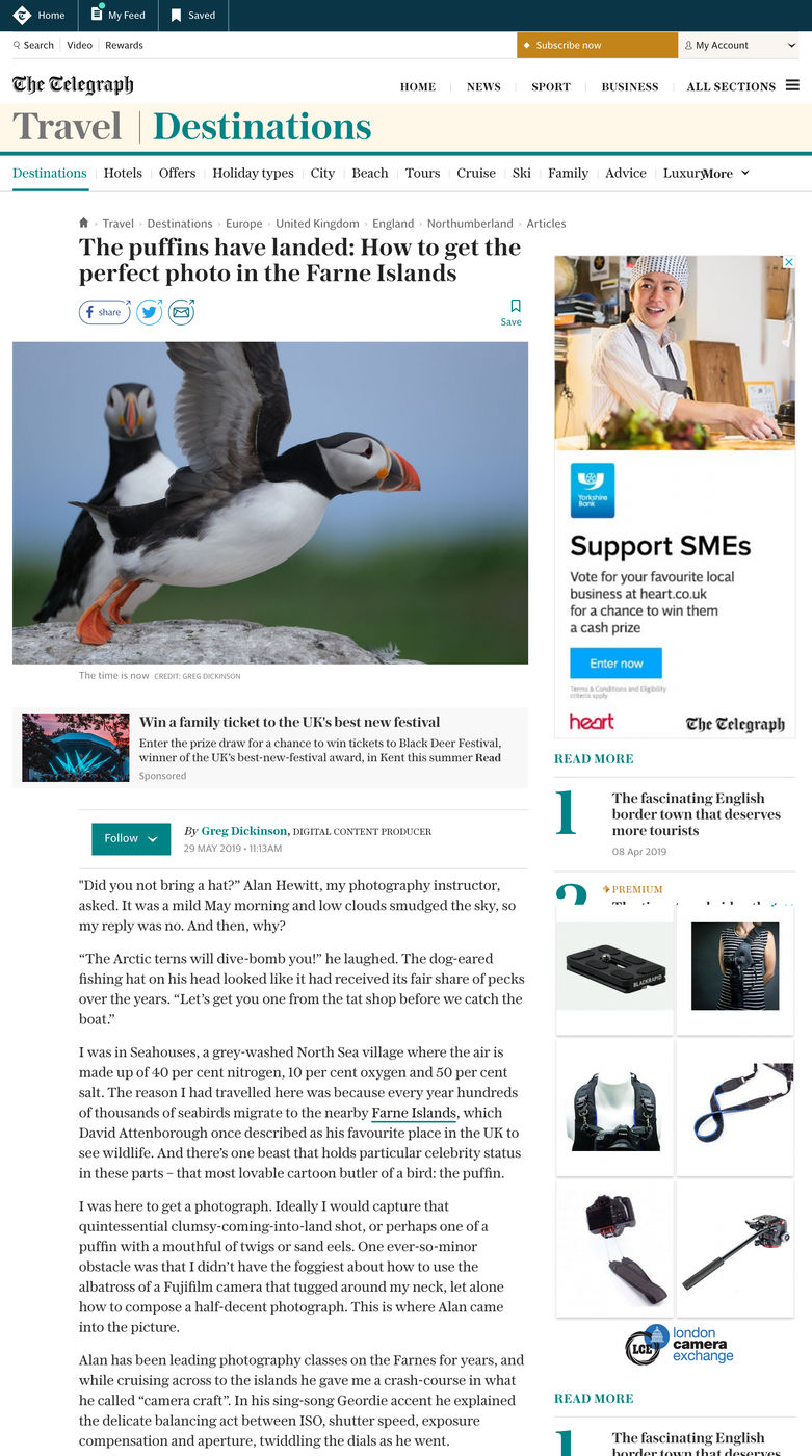 Daily Telegraph Travel The Puffins Have Landed Alan Hewitt Photography