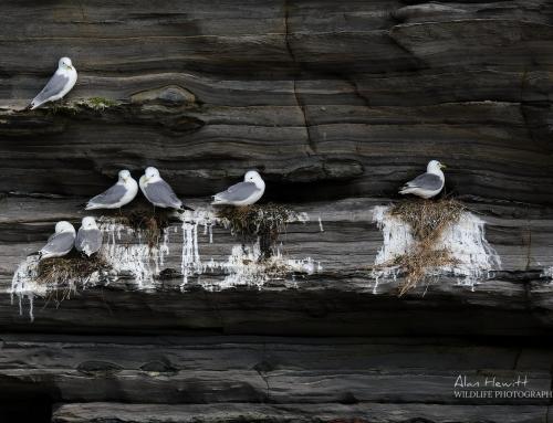 FUJIFILM X Story – 'Wildlife Photography on your Doorstep'