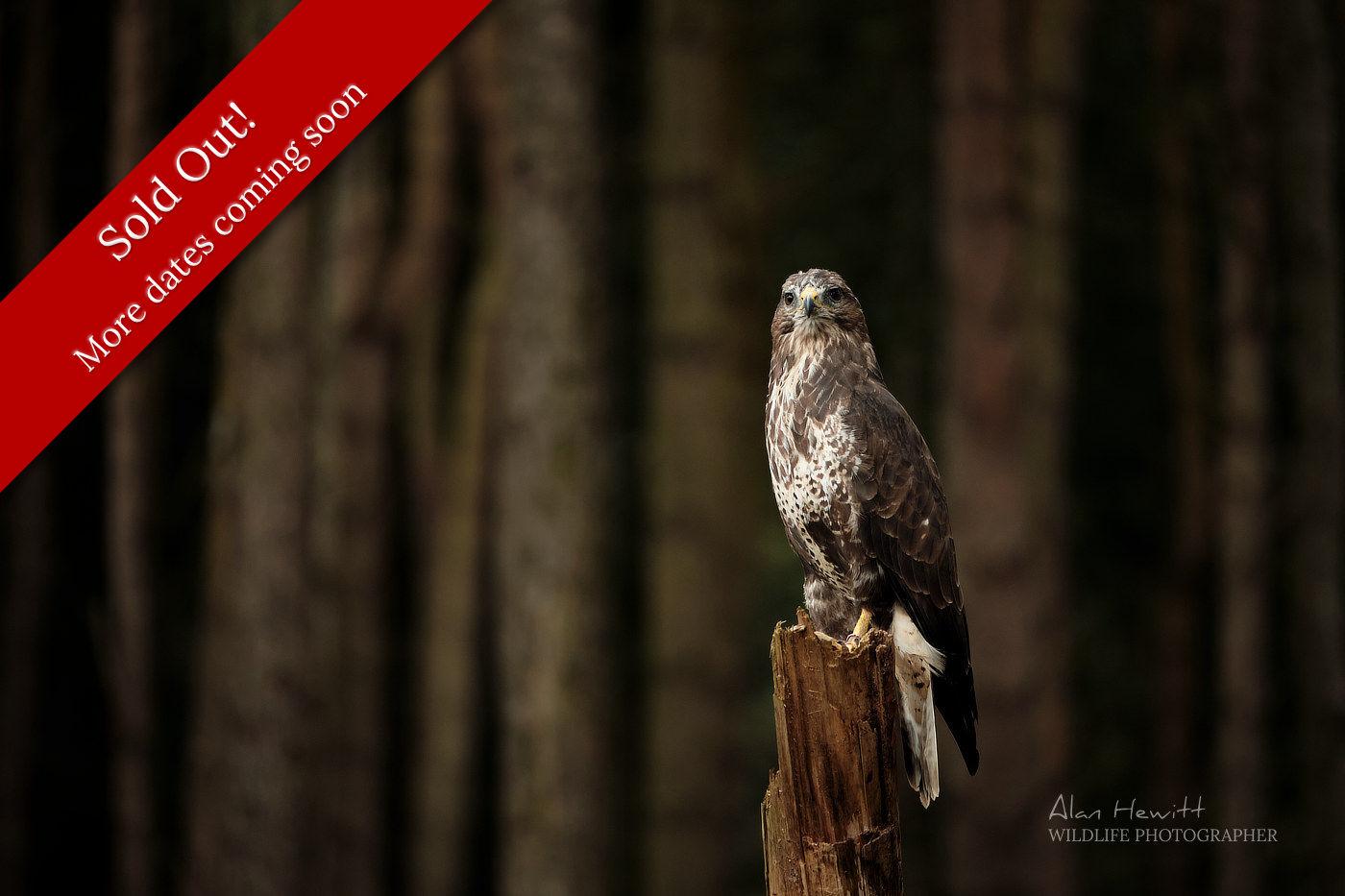 Alan Hewitt Photography Birds of Prey Workshop
