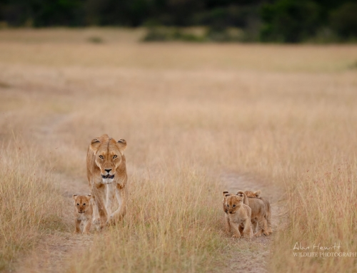 Featured Photograph – Returning to the Pride