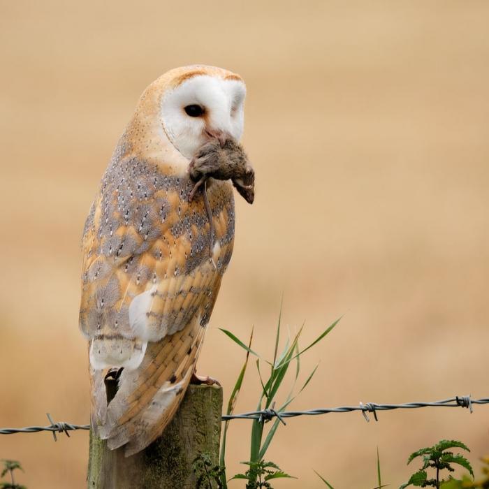Birds of Prey Photography Workshop Northumberland