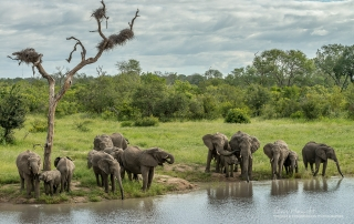 Sabi Sands Elephants Alan Hewitt Photography
