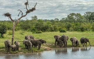 Sabi Sands Elephants Alan Hewitt Photography
