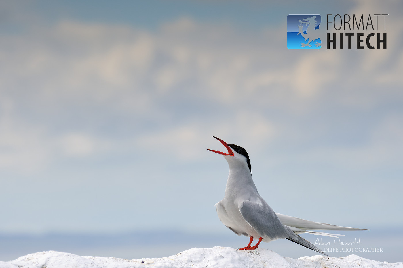 Arctic Tern Formatt-Hitech Filters