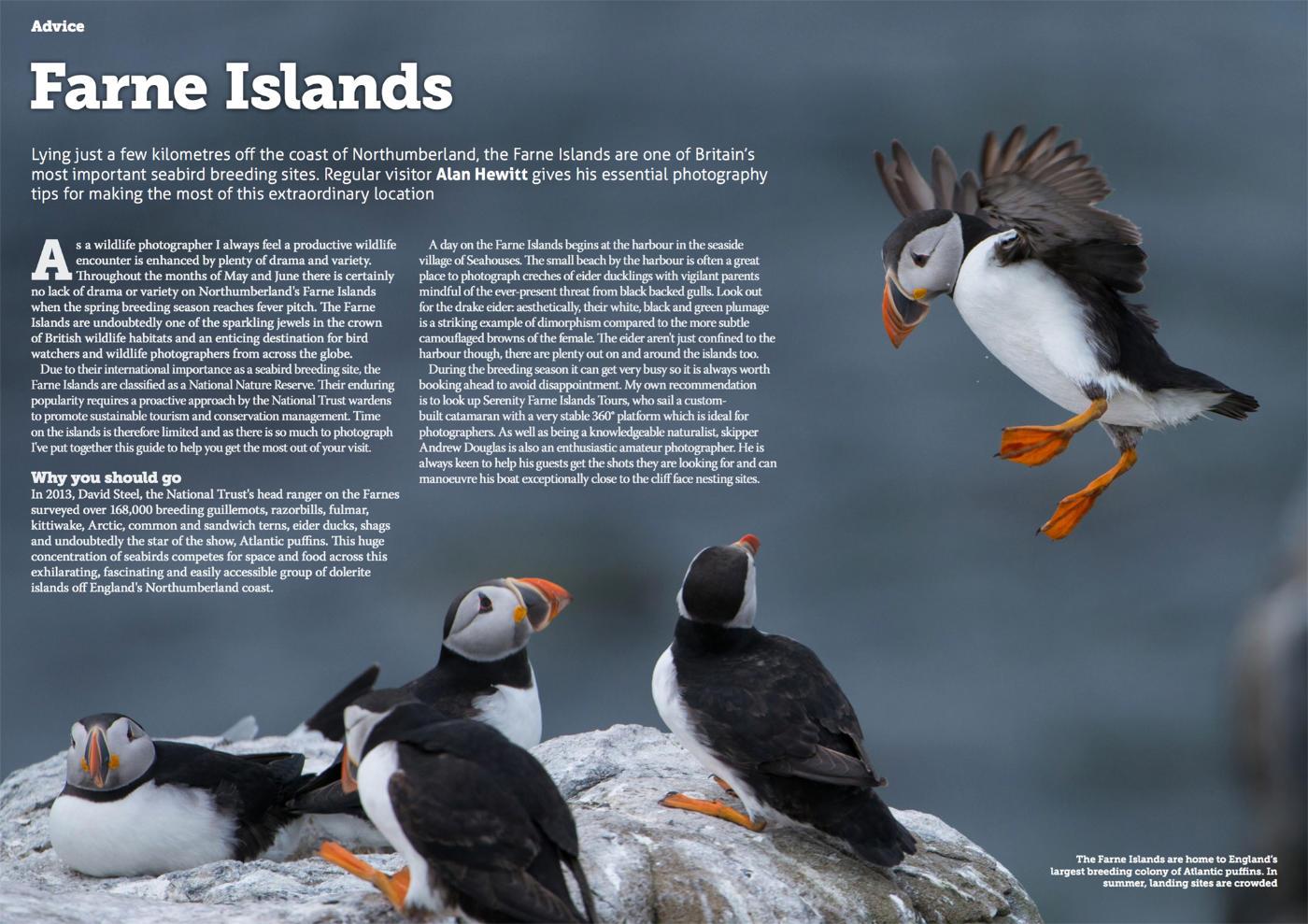Wild Planet Photo Magazine - Farne Islands Alan Hewitt