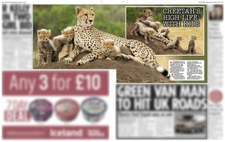 Daily Star Kisaru Female Cheetah Alan Hewitt Photography