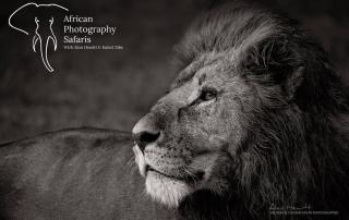 Alan Hewitt Wildlife Photography African Photography Safaris