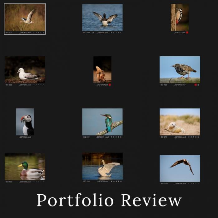 Wildlife Photography Portfolio Review