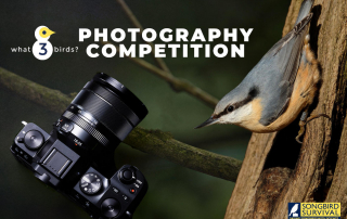 what3birds SongBird Survival Photography Competition